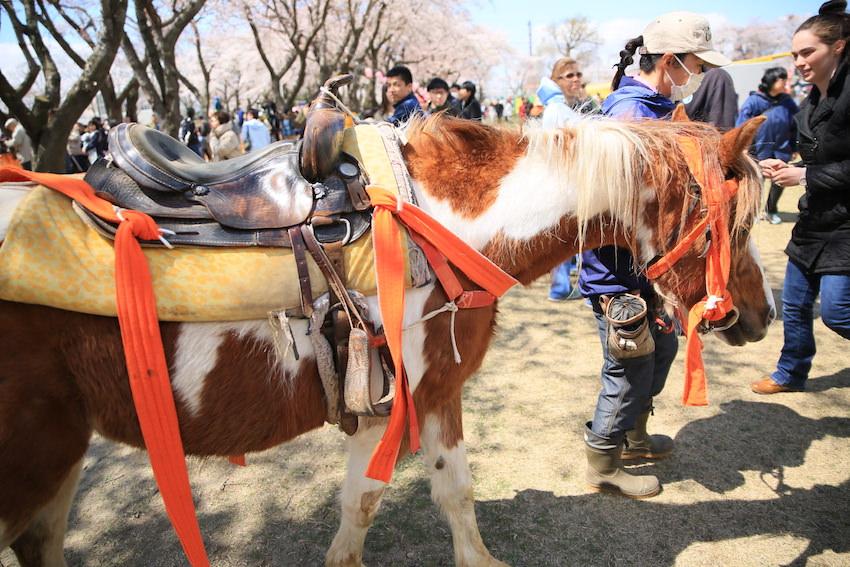 流鏑馬の馬さん_十和田春まつり2017